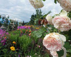 Bayreuth: Halbzeit bei der Landesgartenschau