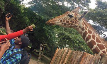10 Stunden in Nairobi überbrücken